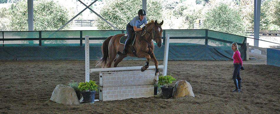 Stephanie-Stephens-Horse-Equestrian-950px